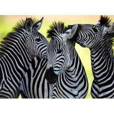 Зебры, 200*147 см