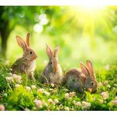 Кролики D2-113, 300*270 см