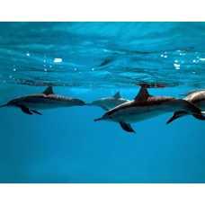 Дельфины 2 Б1-019, 300*238 см